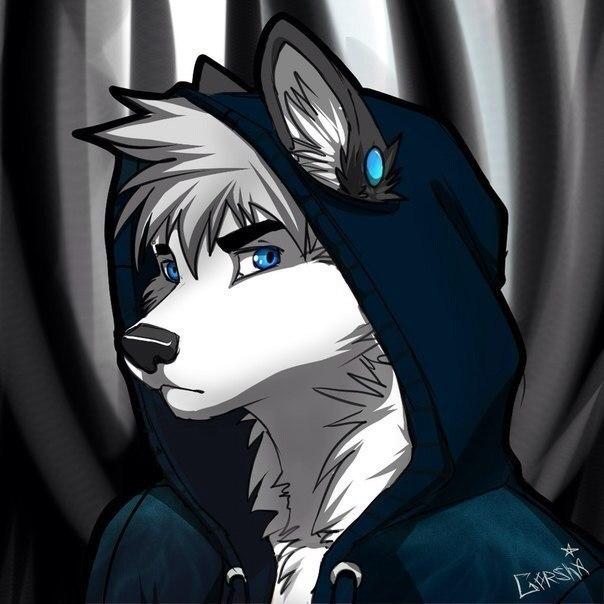 волки фурри фото