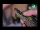 BBC Заповедник в дебрях Африки 02 серия Реальное ТВ животные 2005
