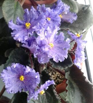 Цветы у Ликки S20eTSr8fuo
