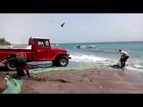 Промысловая рыбалка в ОАЭ, Фуджейра, 2018. Поймали огромного ската