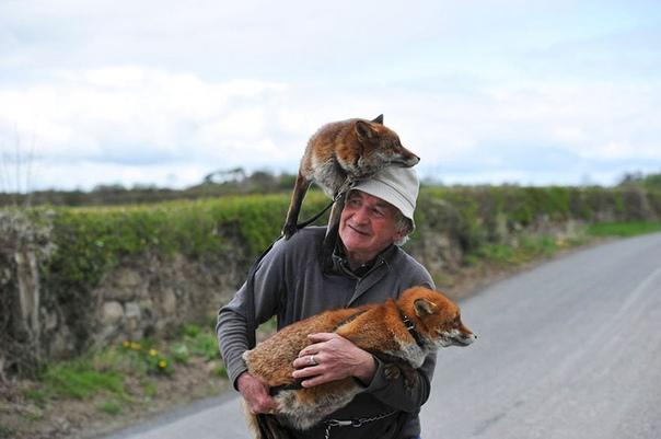 Лисички Грэнни и Минни обрели папу. Пэтси Гиббонс нашёл этих двух лисиц ещё малышами, брошенными и осиротевшими. Пэтси назвал их Грэнни и Минни и решил выходить. После того, как лисички