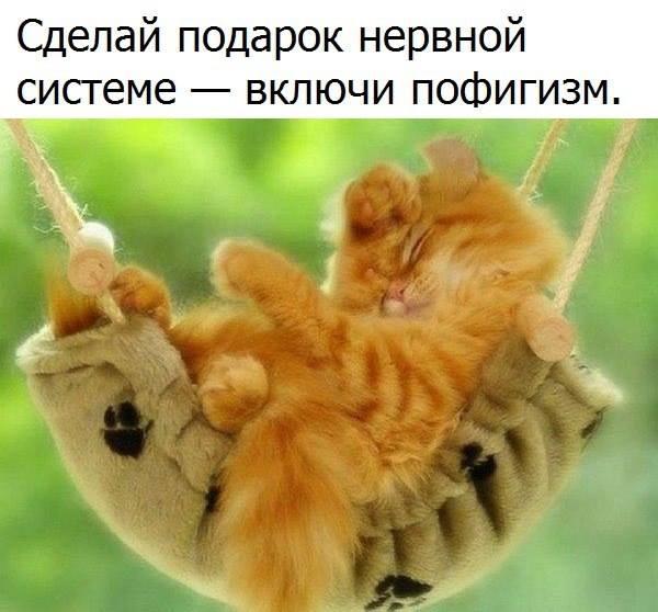 https://pp.userapi.com/c543105/v543105788/2295c/GlmRSADyzOs.jpg