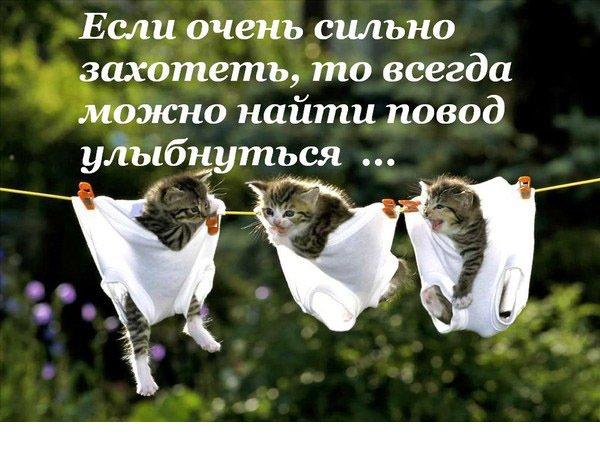 http://cs320322.vk.me/v320322339/53ad/RIFbW4h18Ko.jpg