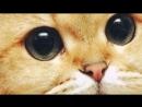 Милый котик 3