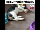 Щенка разбудила еда