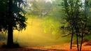 Магический лес : волшебная музыка для положительных изменений в вашей жизни.
