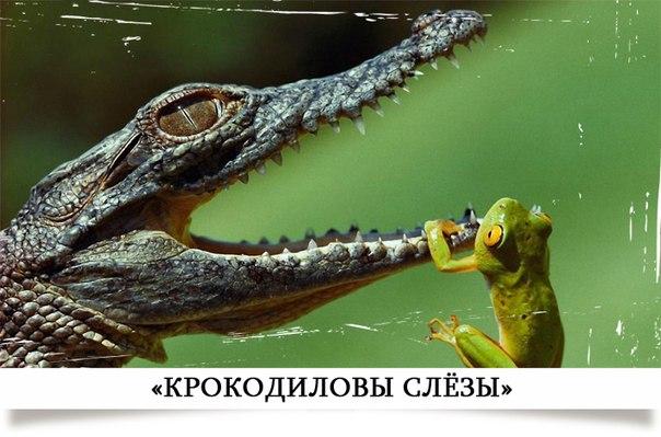 http://cs14108.vk.me/c7005/v7005512/83c7/UH0b1i6wUlw.jpg