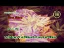 La codicia y las drogas dile no a las drogas