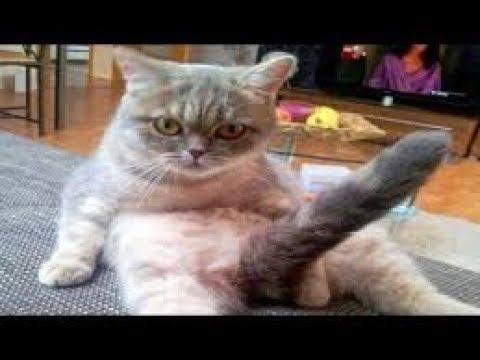 смешная подборка приколов про котов и кошек полный угар