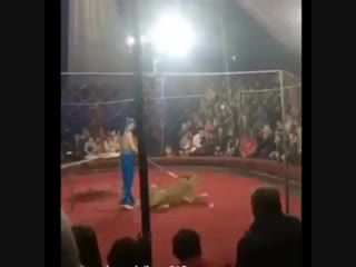 Нападение львицы на ребенка в цирке