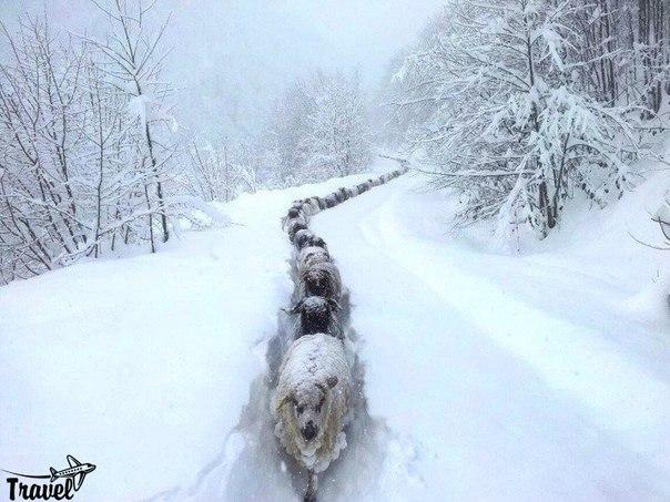 Снежный экспресс
