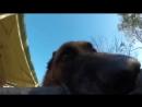 Овчарка украла у хозяина GoPro и сняла погоню на видео))