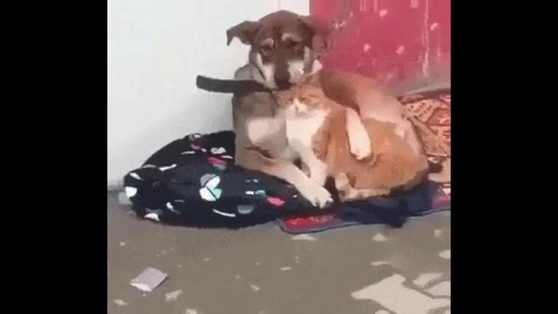 Тише, не плачь!