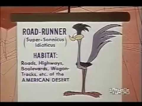 Why Wile E. Coyote is obsessed with the Road Runner.