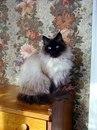 Сава Климова фото #15