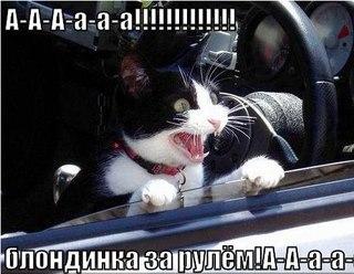 картинки котики смешные с надписями