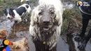 Swamp Dog Loves To Dunk His Head Pools Of Mud - TOBY | The Dodo