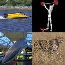 Лодка, фигура человека со штангой, касатка, гепард