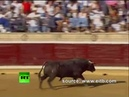 Spain Rampage Raging bull charges into crowd injuring 40 at bullfight coub