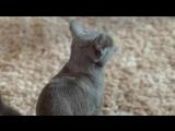 Музыка из рекламы Sheba - Предложение (Россия) (2017)