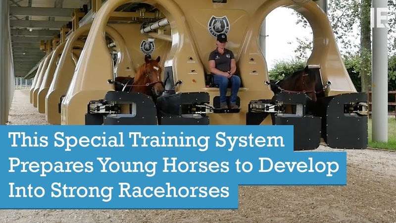 This Special Training System Prepares Young Horses to Develop Into Strong Racehorses