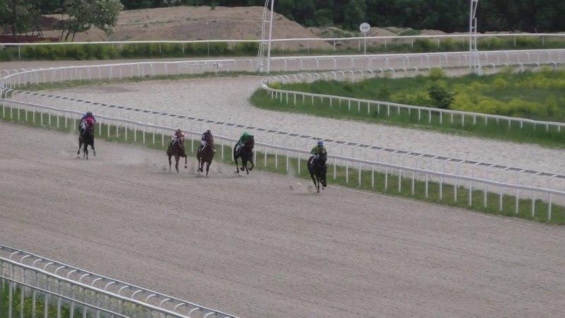 20 05 2018 Пробный приз 3 гр на лошадях 2 х лет чистокровной верховой породы Элюзив Сэнди