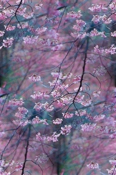 Цветочные и растительные фоны - Страница 3 2_XnxW4jn5Y