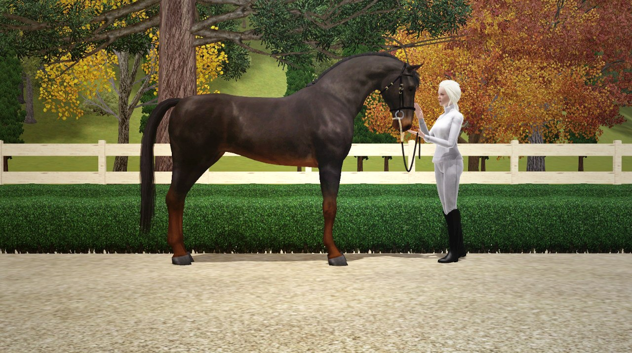 Регистрация лошадей в RHF 1.1 - Страница 5 JCPQ8j2I7jc