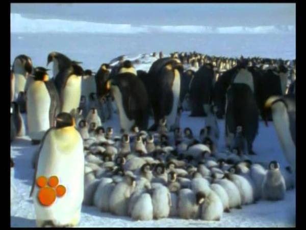 Πιγκουίνοι- Ο μαγικός κόσμος των ζώων