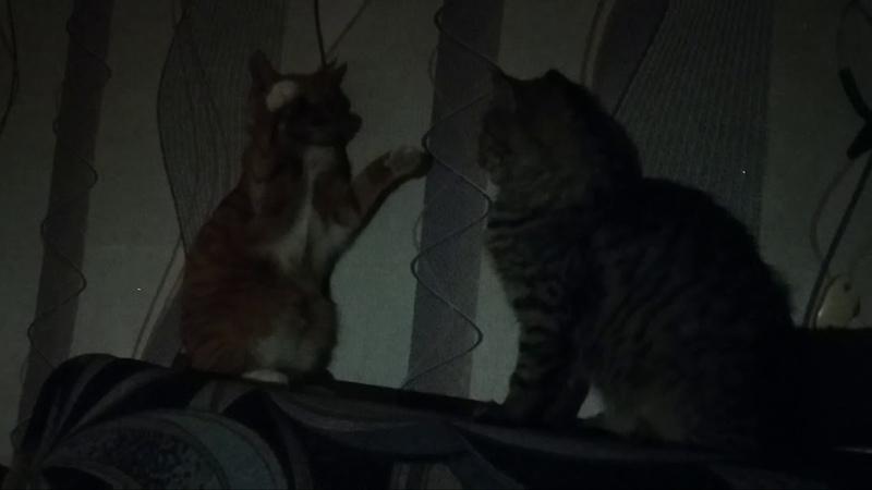 Вечерние игры котят