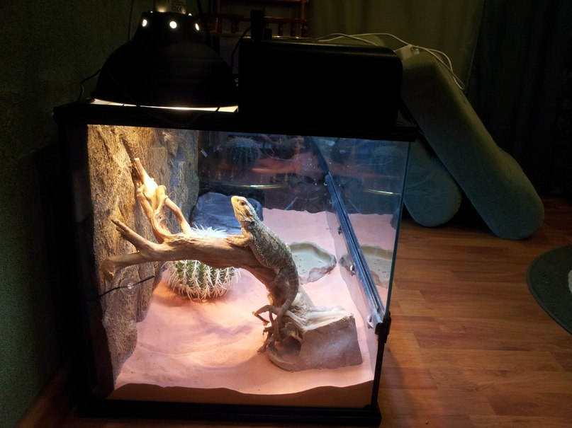 Террариум своими руками для ящериц