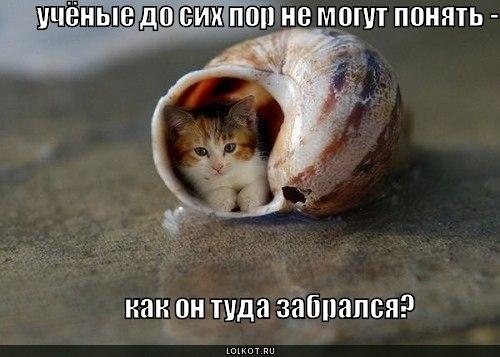 http://cs311423.vk.me/v311423503/6a68/isJx61kXyEM.jpg