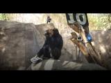 Вечеринка у гориллы дома