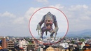 5 TIMES GIANT CREATURES CAUGHT ON CAMERA SPOTTED IN REAL LIFE! 2