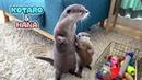 カワウソコタローとハナ 可笑しくてほっこりする2人のやりとり Otter K