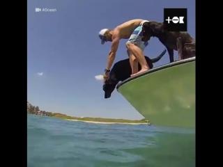 Собака по кличке Лила помогает людям собирать мусор из океана!