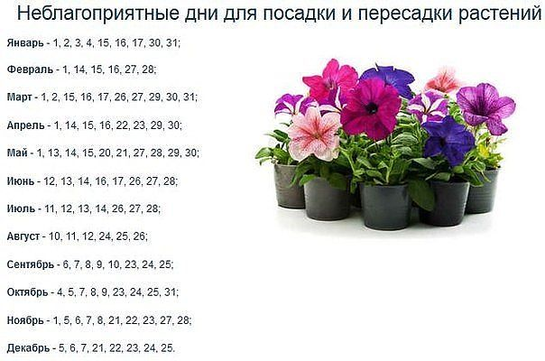Садоводство и цветы SLDe1629gwo