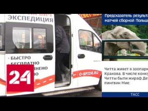 В Петропавловске-Камчатском стартовала всероссийская акция по борьбе с ВИЧ-инфекцией - Россия 24