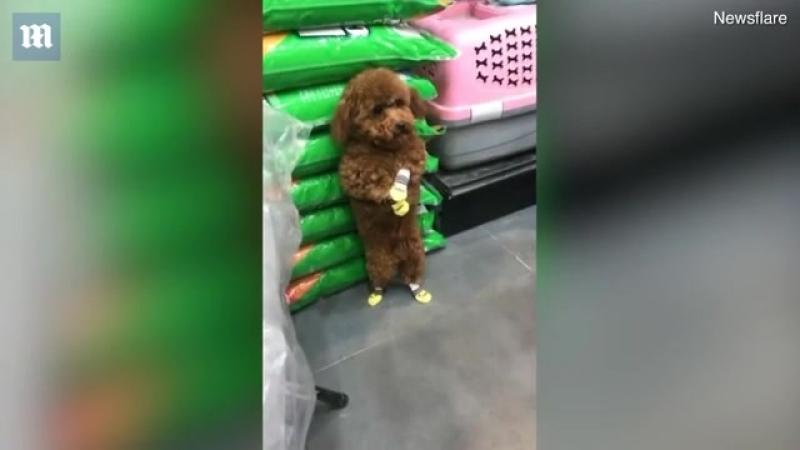 Испуганный пёс