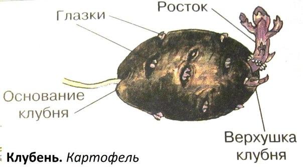 Решебник по русскому языку 3 Класс 2 Часть Учебник Соловейчик