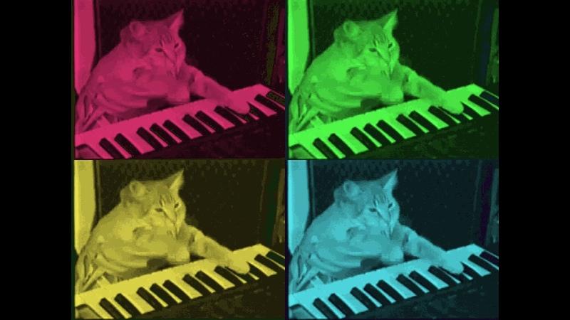 Cat and Yamaha psr 750 (my demo on Yamaha played out at night)