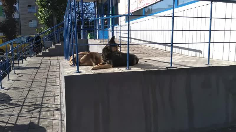 Троллинг собак утидикающим котэ