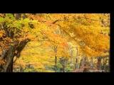 Raul Di Blasio - Golden Autumn (Золотая осень)