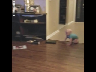 Собака и малыш играют в догонялки