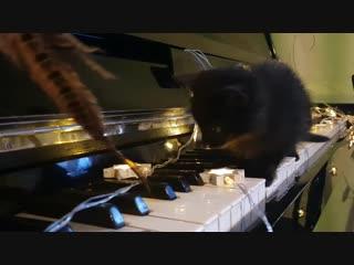Чернушки и пианино