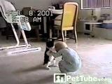 Ребенок играет с кошкой. Позитив!