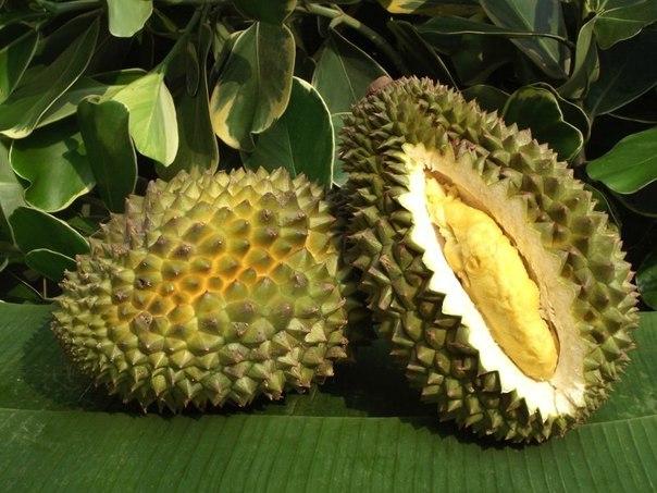 Картинки по запросу атемойя фрукт