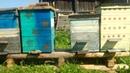 Все Секреты Пчеловодства КАК НЕ РАЗОЗЛИТЬ ПЧЁЛ