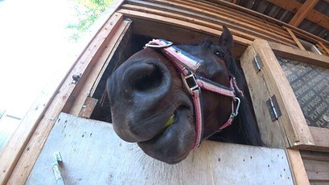 Horses_spb video