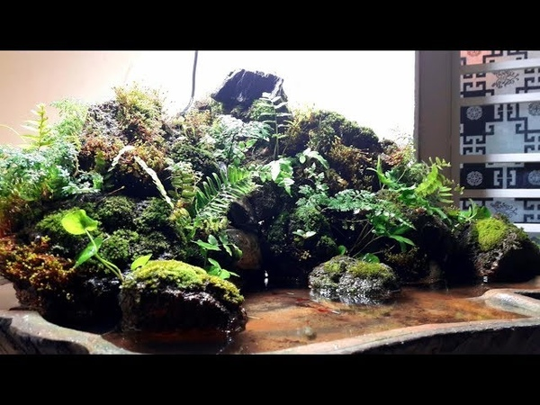 Layout moutain paludarium natural mini with penjing style